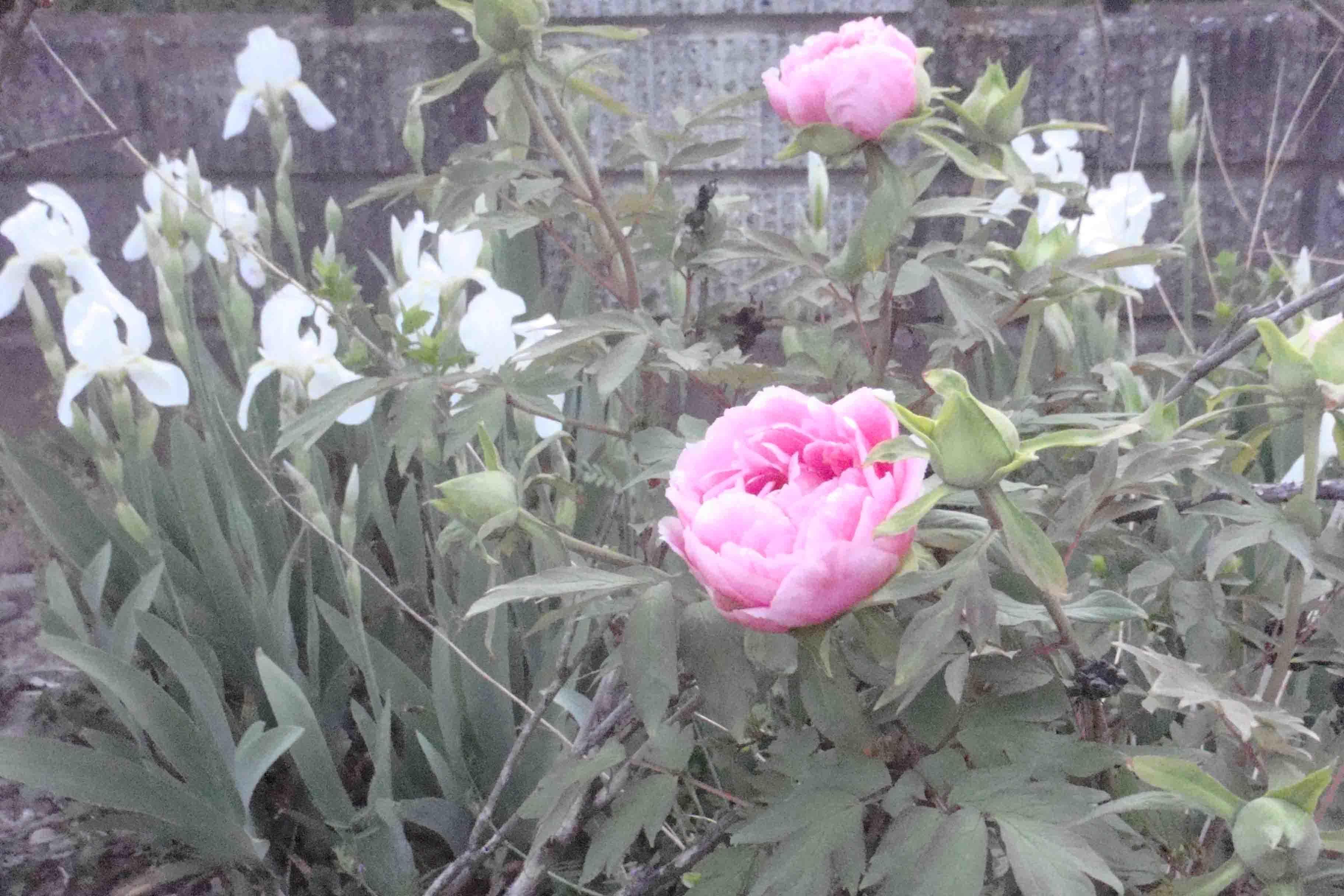 花々_e0226943_23531759.jpg