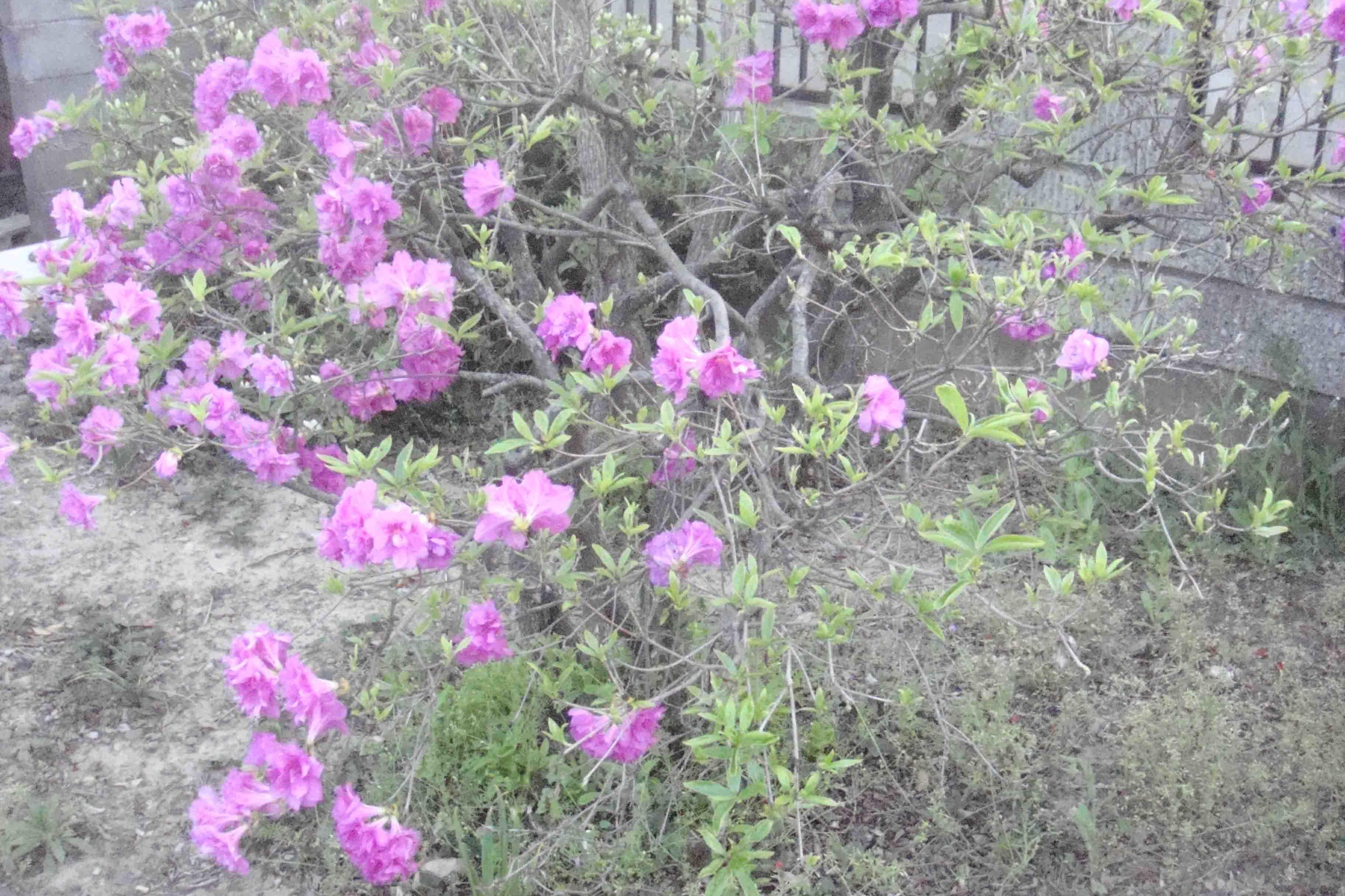 花々_e0226943_23533963.jpg
