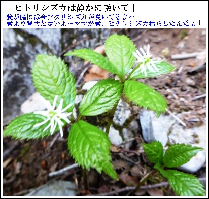 f0224350_1801369.jpg