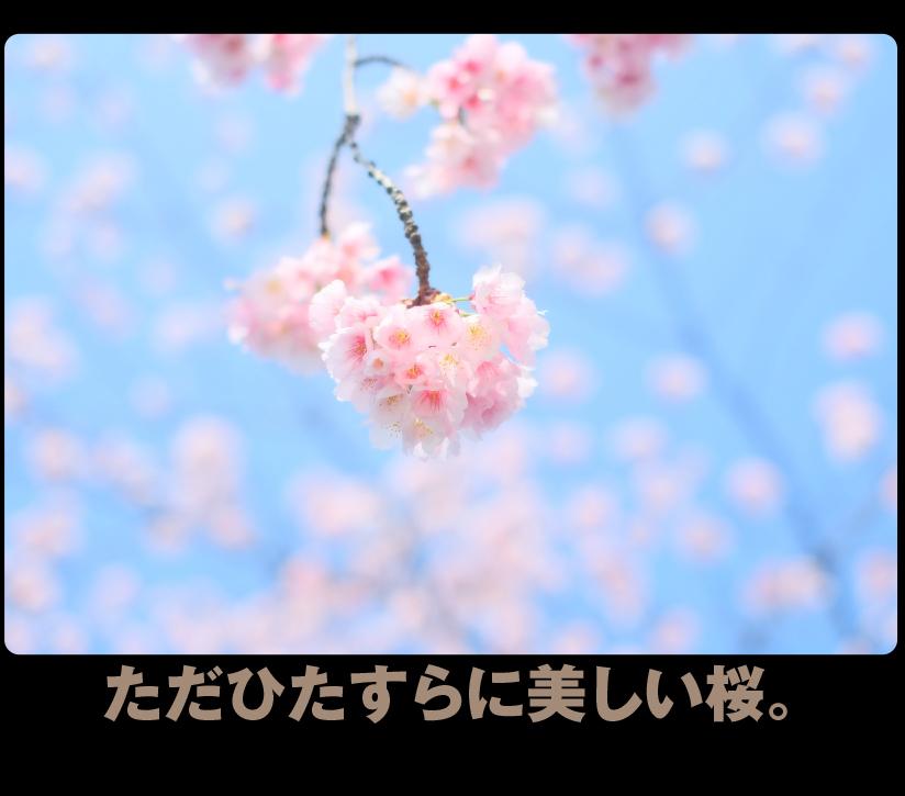 c0354952_21340698.jpg