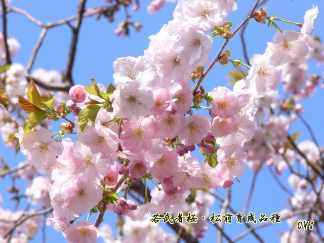 f0166871_912926.jpg