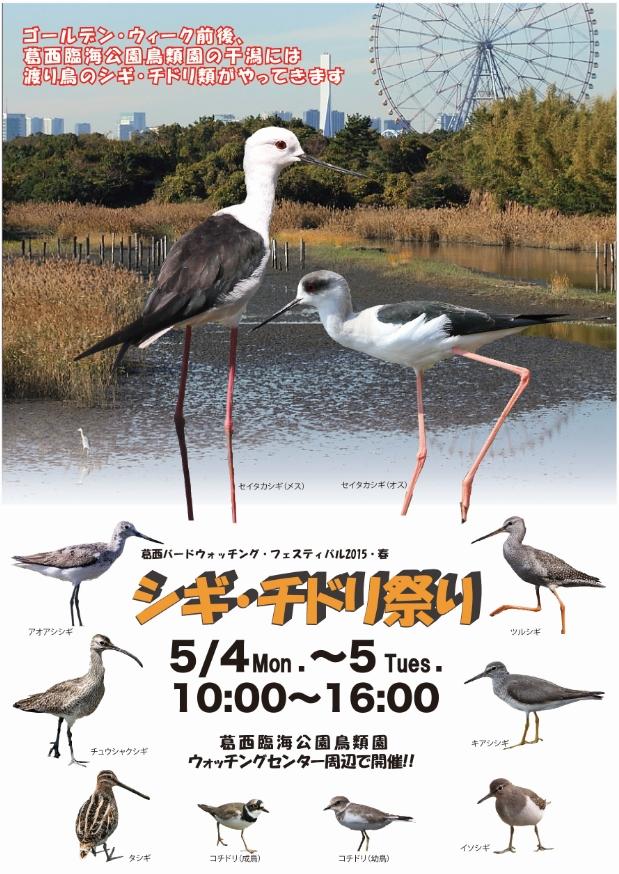 ★G・Wにシギ・チドリ祭りを開催します!_e0046474_1394127.jpg