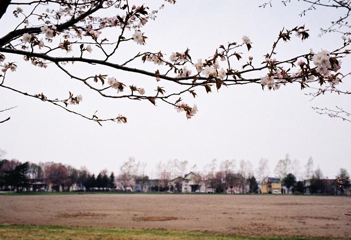 恵庭中島公園と地方紙コラム_c0182775_187421.jpg