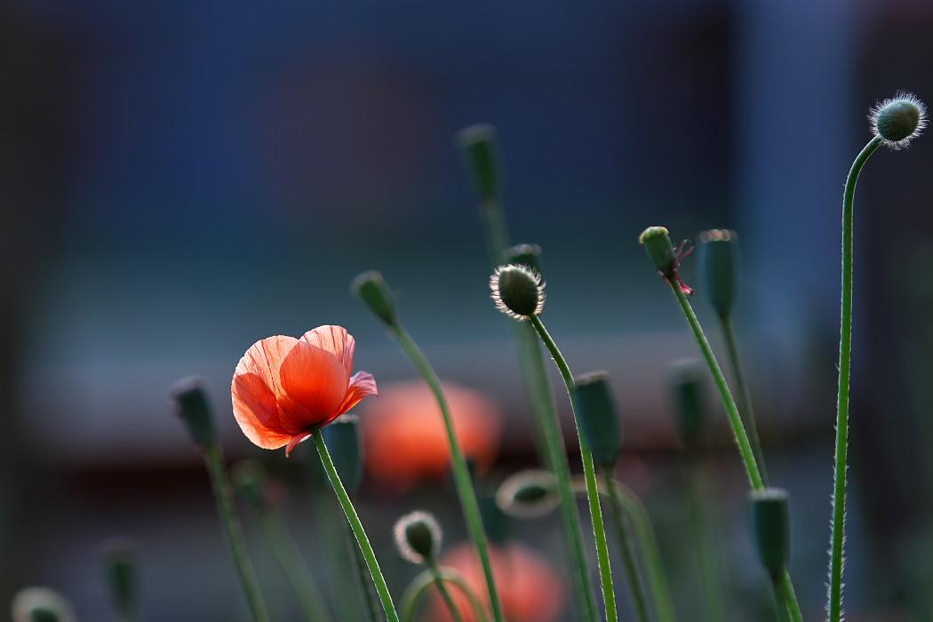路傍の花。_c0187584_18164066.jpg