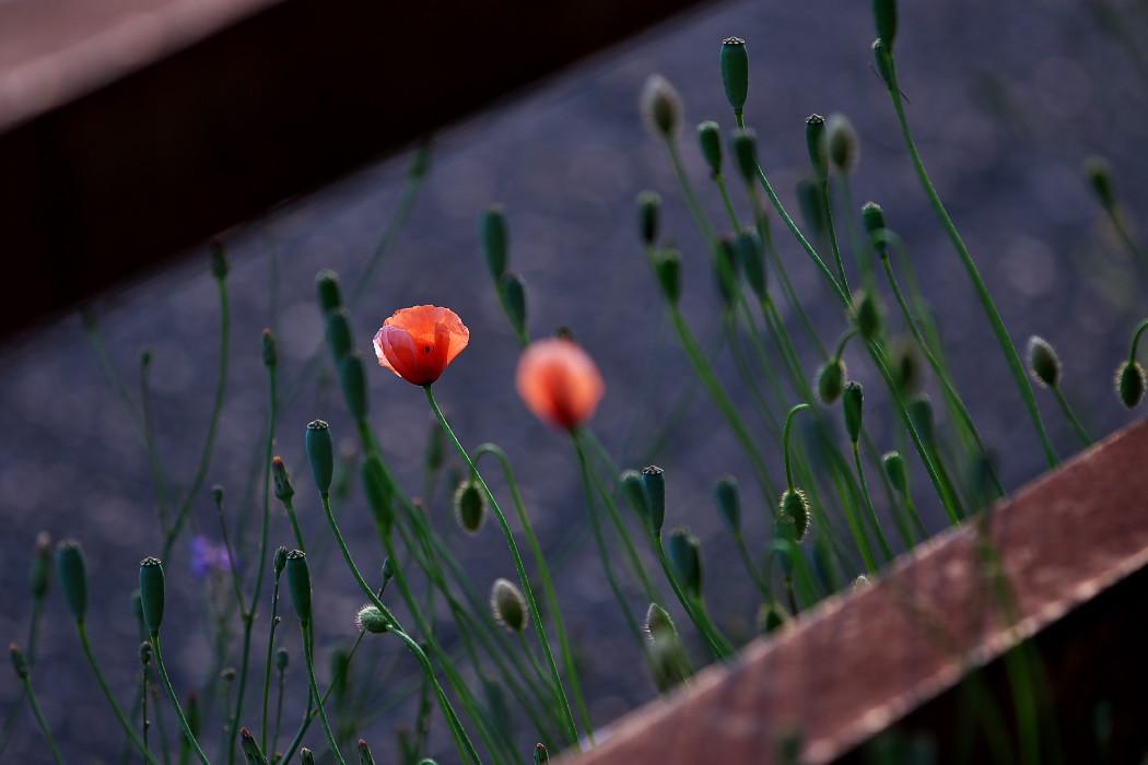 路傍の花。_c0187584_18165251.jpg