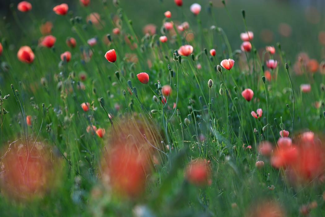 路傍の花。_c0187584_18172355.jpg