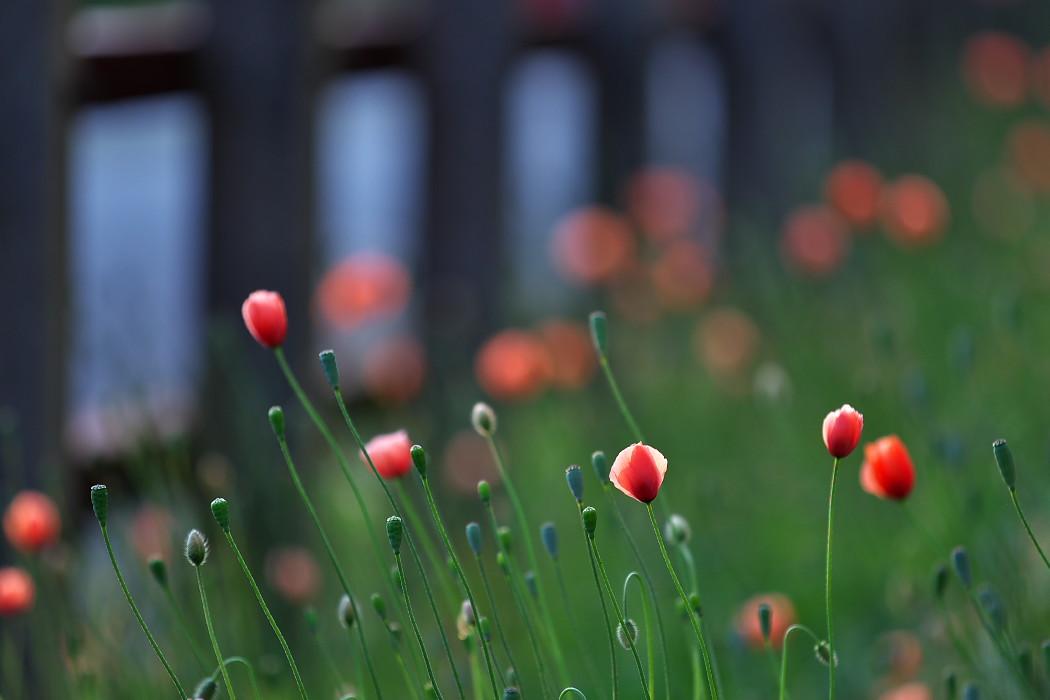 路傍の花。_c0187584_18174045.jpg