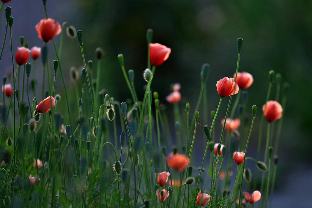 路傍の花。_c0187584_1817655.jpg