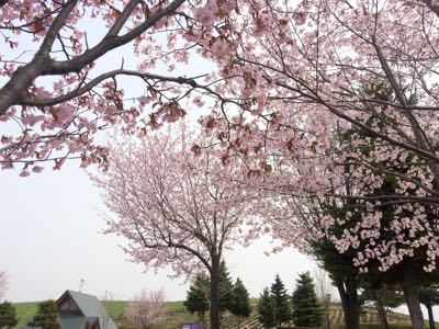 春うららo(^_^)o_f0096216_122054100.jpg