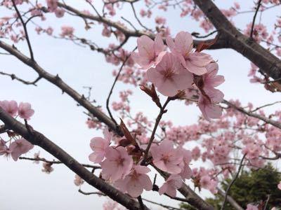 春うららo(^_^)o_f0096216_12205558.jpg