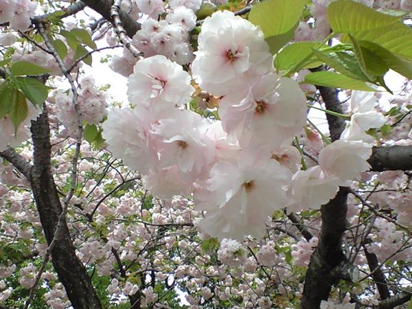 4月の「編集部おすすめ記事」(写真・お出かけ編)_f0357923_14111023.jpg