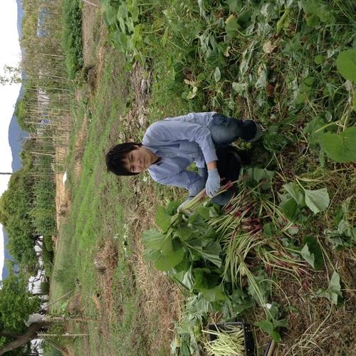 初夏の収穫です_e0154524_20213222.jpg