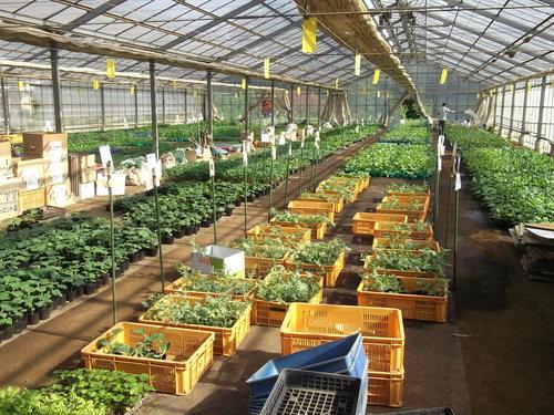 夏野菜の植え付け..完了です。_b0137932_21312479.jpg