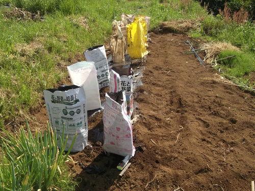 夏野菜の植え付け..完了です。_b0137932_2133834.jpg