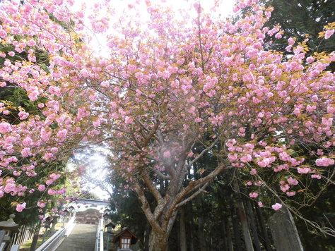 金華山へ行きました_d0112533_16265251.jpg