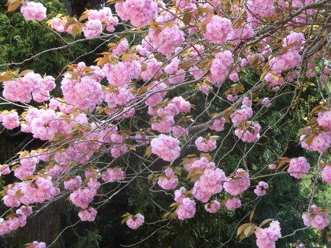 金華山へ行きました_d0112533_16272345.jpg
