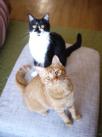 猫のお留守番 クルルちゃんタマラちゃん編。_a0143140_21244150.jpg
