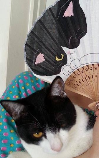 涼しげな羽織・本塩沢の着姿・猫の扇子素敵な方のもとへ_f0181251_185185.jpg