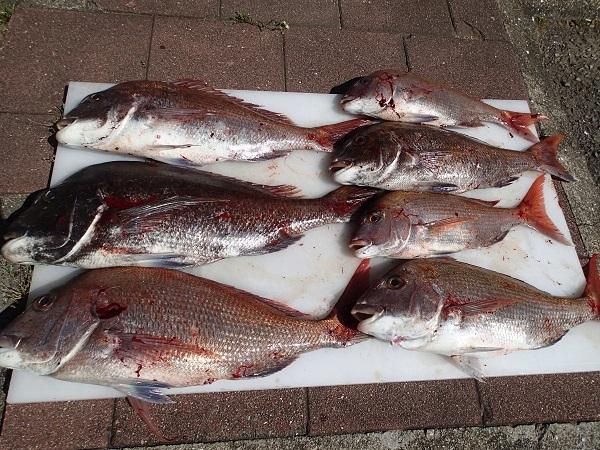 Qマリ釣り大会(つばきマリーナ)_a0077071_16381505.jpg