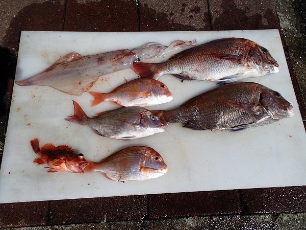 Qマリ釣り大会(つばきマリーナ)_a0077071_16390433.jpg