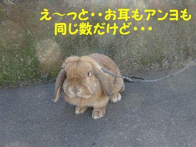 ねずみは無くなってウサギが出た_e0222588_17032568.jpg