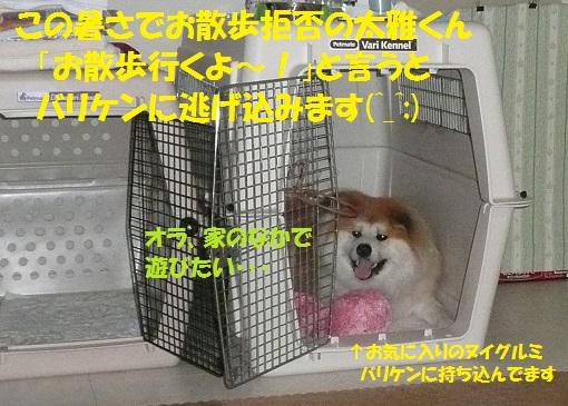f0121712_2256485.jpg