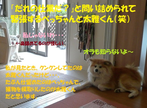f0121712_2257553.jpg
