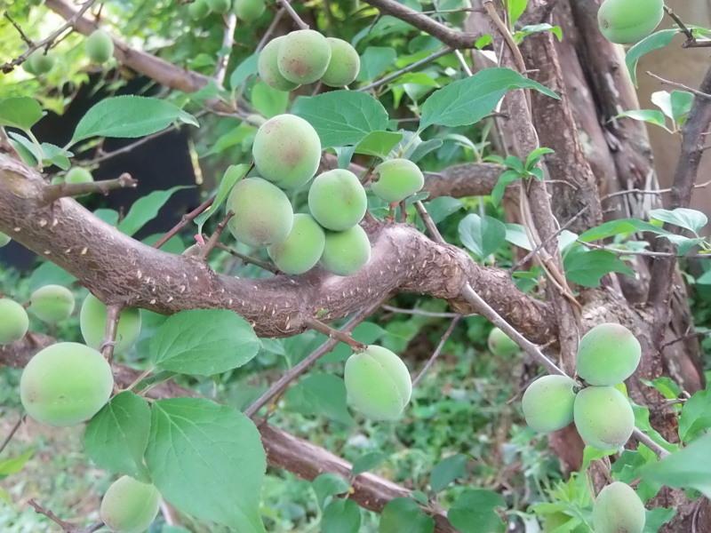 野いちごの季節です。_a0125419_07105639.jpg