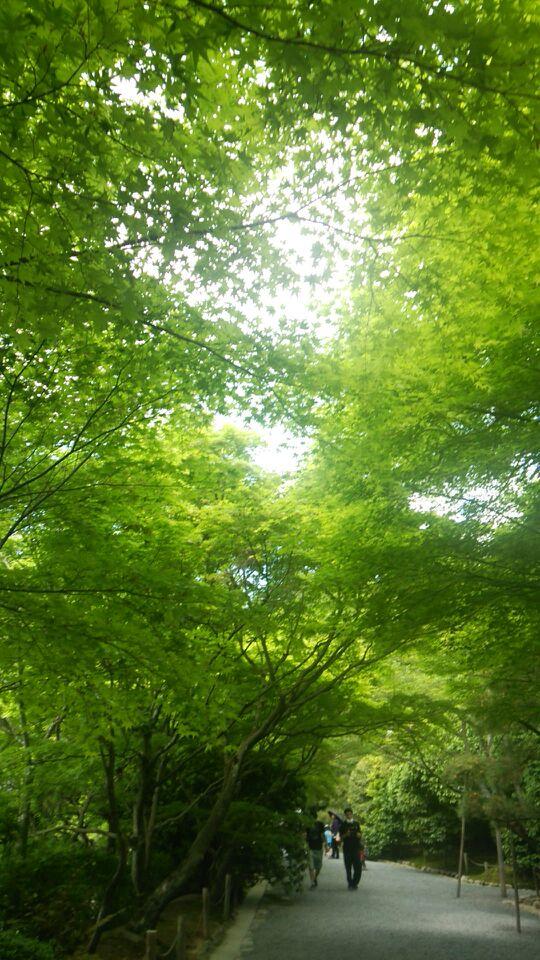 新緑の京都_a0112220_8373272.jpg