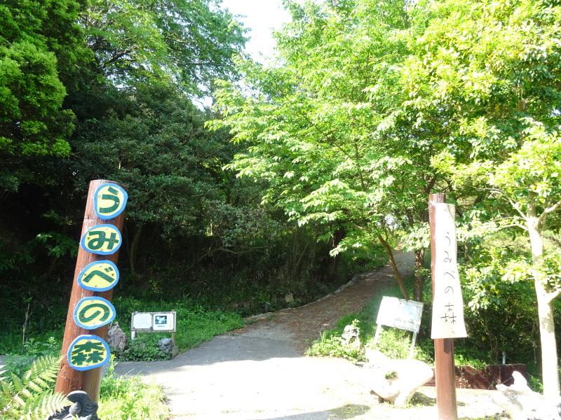 うみべの森に新しい物置が完成しました     by     (TATE-misaki)_c0108460_17013640.jpg