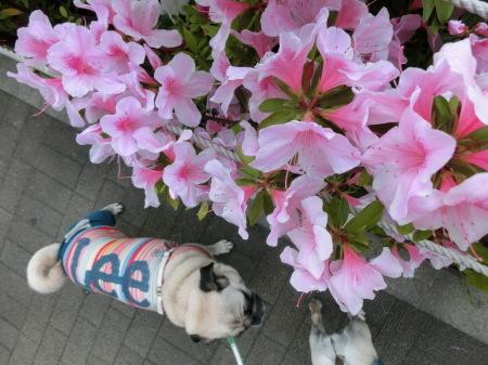 GWは食べ歩き 日本家屋のお店_b0190666_14451667.jpg