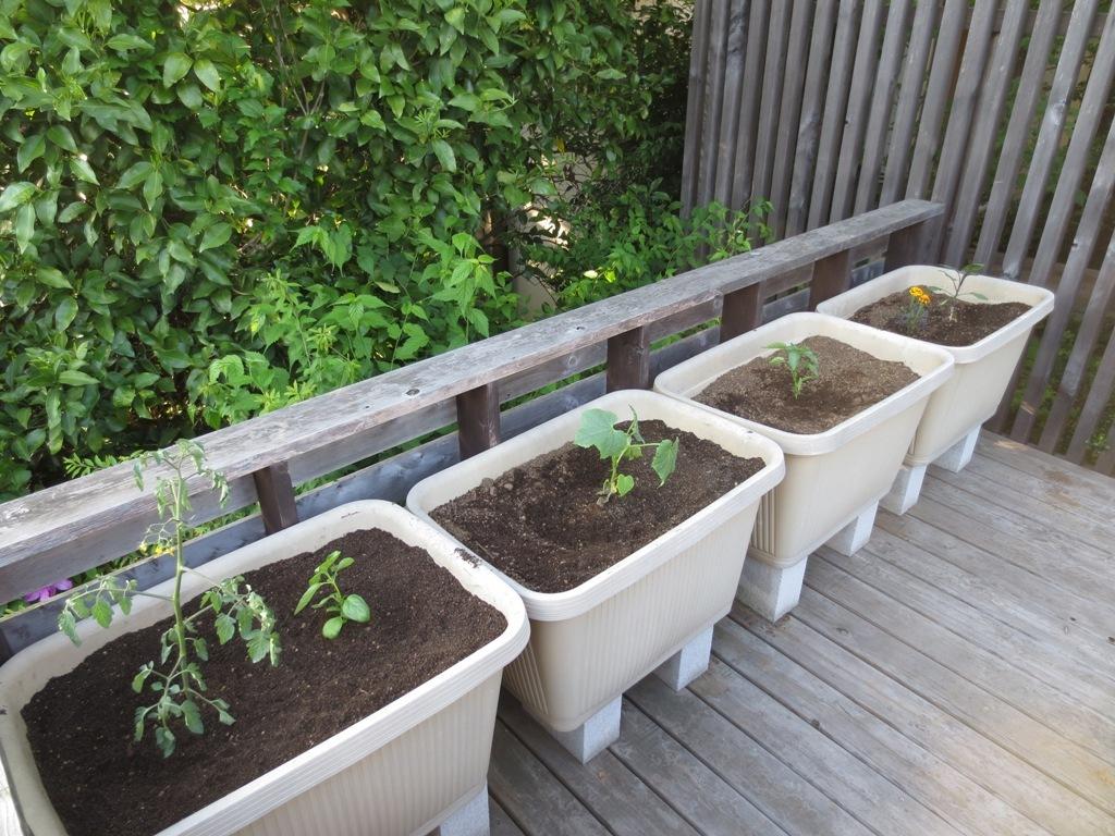 夏野菜の植え付け_c0310571_23084565.jpg
