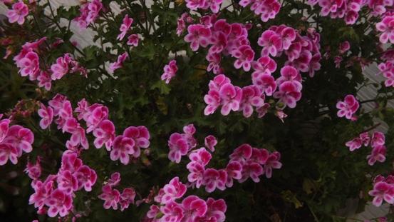 薔薇の始まり_b0214473_13114243.jpg
