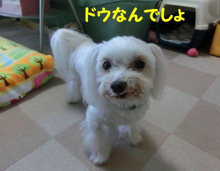 b0193480_16253788.jpg