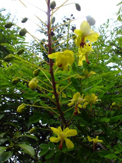 4月30日 昭和薬科大学・薬用植物園など見て歩き_e0145782_11485285.jpg