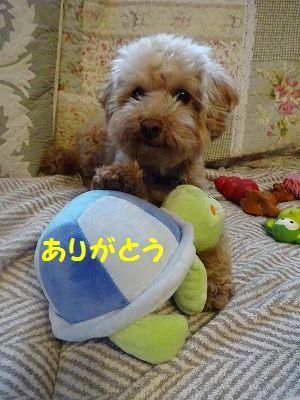 ようこそチーム富士宮に・・マリン&アンジュ(写真追加あり)_e0222588_18431422.jpg