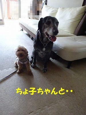 ようこそチーム富士宮に・・マリン&アンジュ(写真追加あり)_e0222588_18434266.jpg