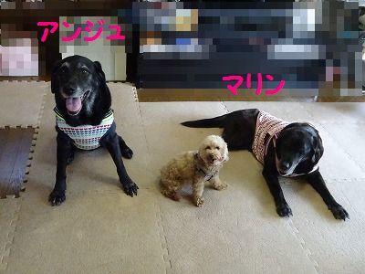 ようこそチーム富士宮に・・マリン&アンジュ(写真追加あり)_e0222588_18434426.jpg