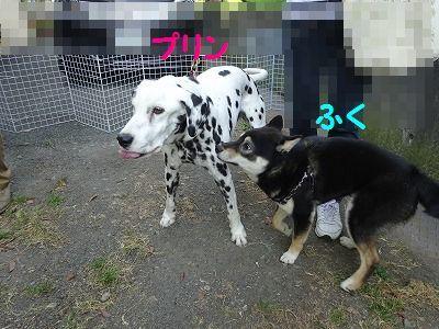 ようこそチーム富士宮に・・マリン&アンジュ(写真追加あり)_e0222588_18434897.jpg