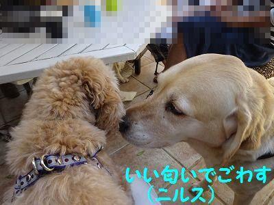 ようこそチーム富士宮に・・マリン&アンジュ(写真追加あり)_e0222588_18440055.jpg