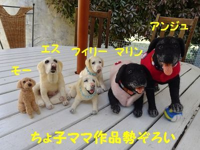 ようこそチーム富士宮に・・マリン&アンジュ(写真追加あり)_e0222588_18440733.jpg