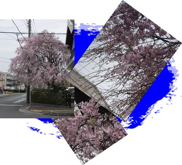 f0223488_127118.jpg
