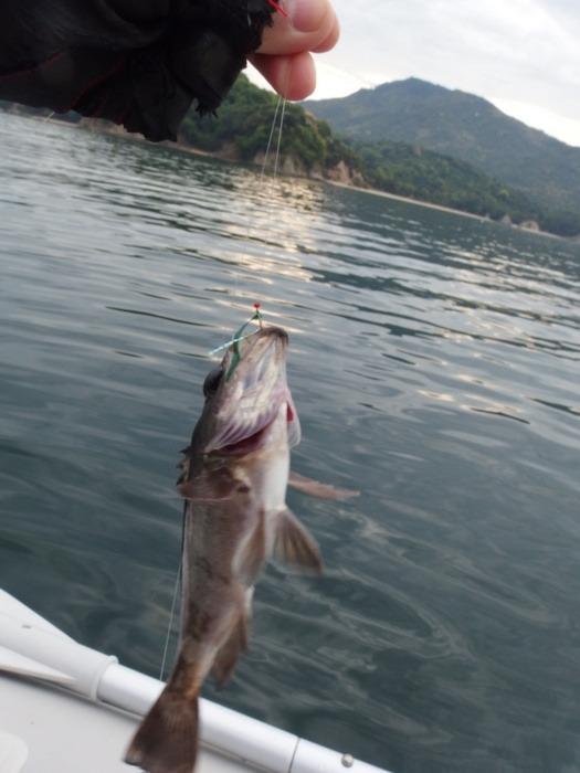 宮島近くで釣り♪_c0116915_2348914.jpg