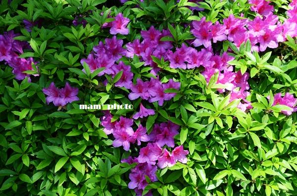 e0081339_2010125.jpg
