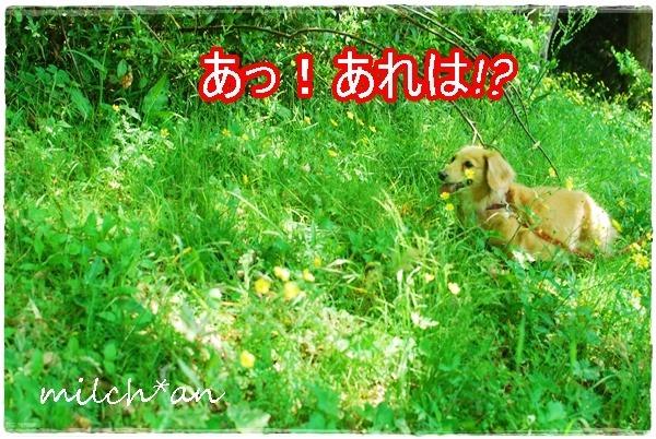 b0115642_10434461.jpg