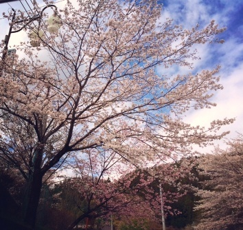 ①.5月のエネルギー&日本三大名湯 草津温泉_b0173754_16390763.jpg
