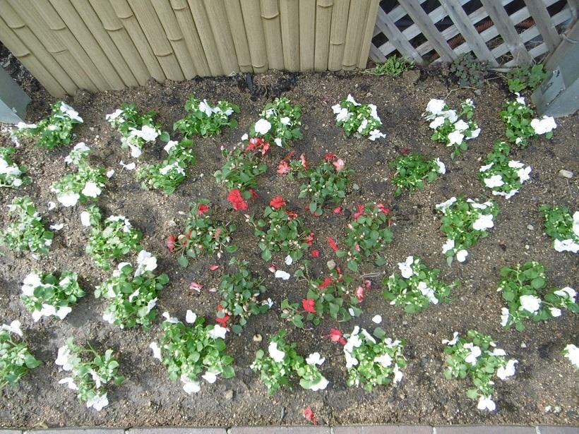 豊満な花壇_f0205367_16034685.jpg