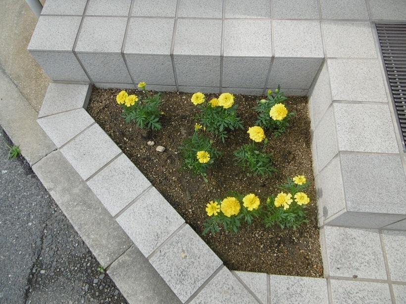 豊満な花壇_f0205367_16085493.jpg