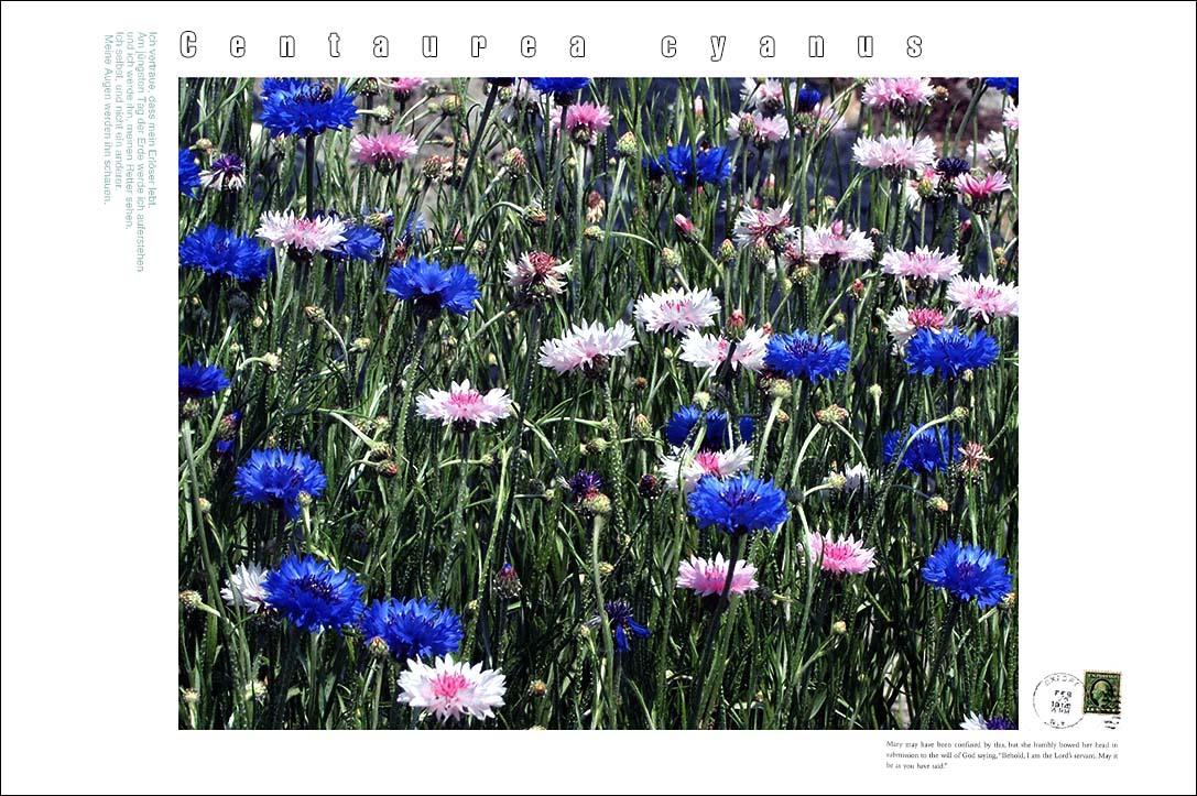 f0198771_003486.jpg