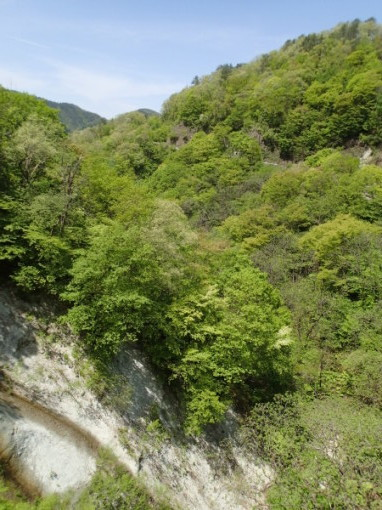 yoshidonさんの新緑林道ツー_a0279883_21315926.jpg